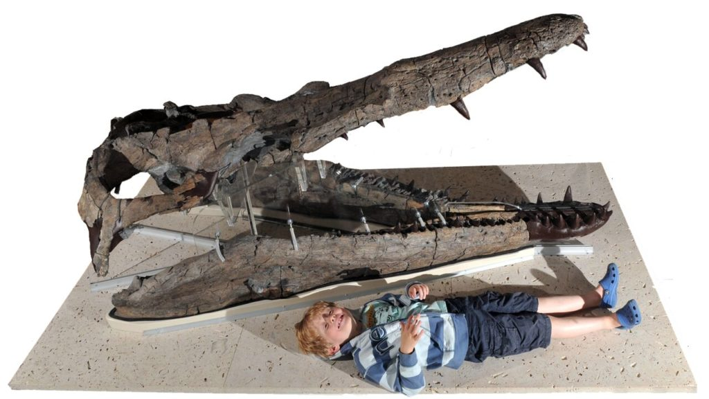 Child lying beside the pliosaur showing how easily he could fit into its mouth!skull, showing