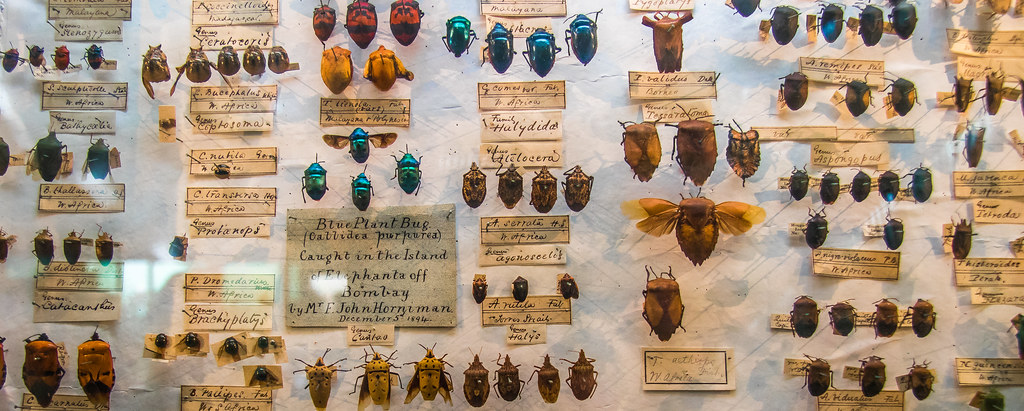 Collction of bugs pinned to board