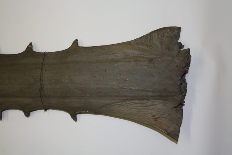 The base of a sawfish rostrum showing the jagged cut made from its removal
