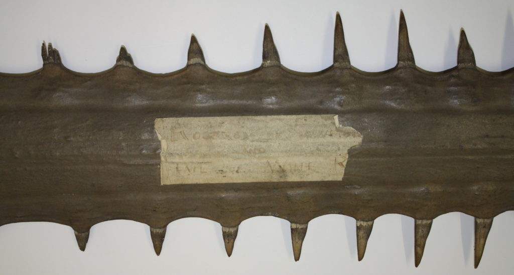 Historic label on Poole Museum's largest saw