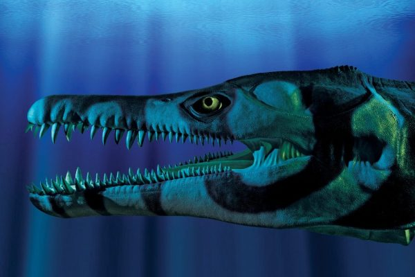 Model to show what the pliosaur looked like when alive. Shown underwater.